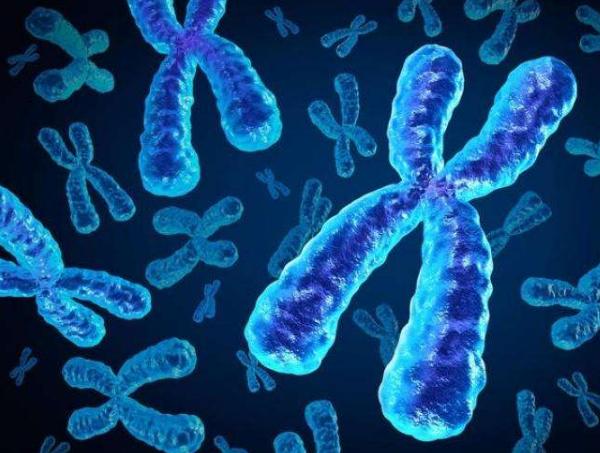 染色体,DNA