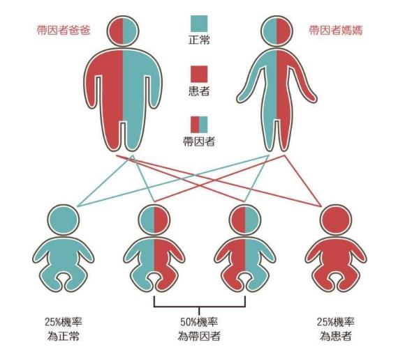 <strong>泰国三代试管婴儿的适用人群有哪些?</strong>