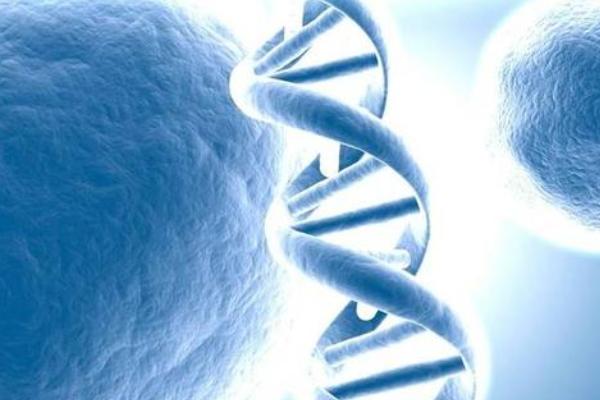 男性精子碎片率高,去泰国做试管如何解决生育问题?