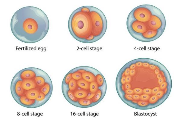 专家建议:染色体异常人群要选择美国第三代试管婴儿