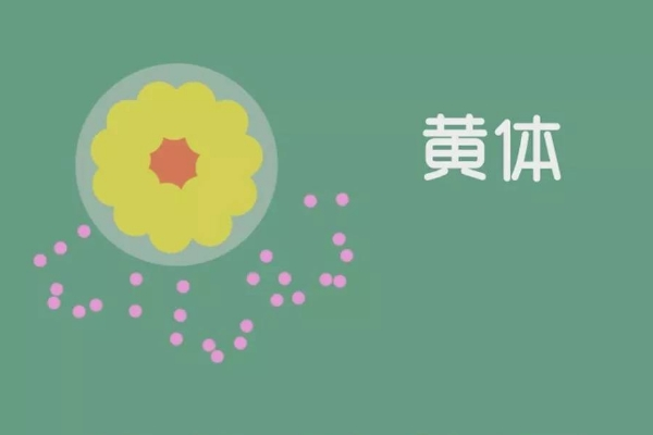 胚胎不着床,找出病因是关键