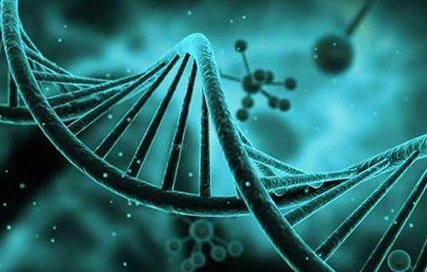 生三孩,一定要注重胚胎的基因筛查