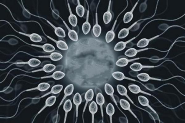 精液不液化赴美做试管婴儿,ICSI成功率有多高?