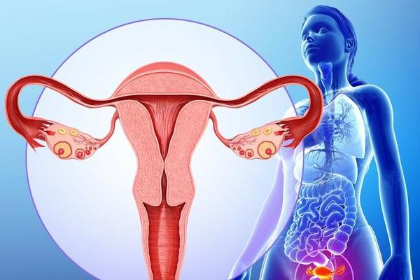 美国试管专家解惑:子宫在什么状态下可以移植?